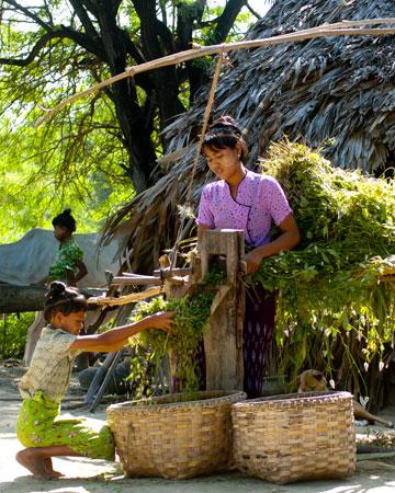 Responsive joomla application template zt five myanmar classic tours best choice of myanmar thecheapjerseys Images